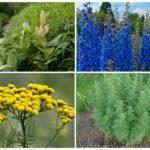 Травы от педикулеза