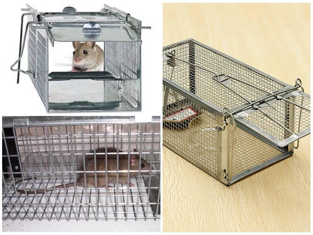 Живоловки для мышей
