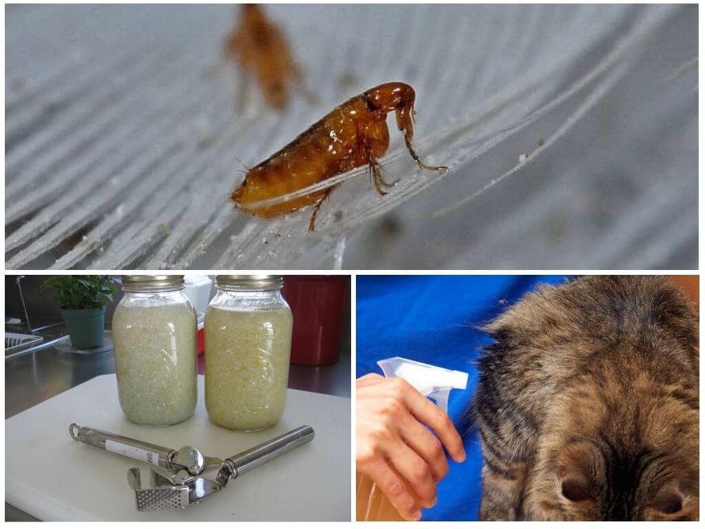 Чеснок для уничтожения насекомых