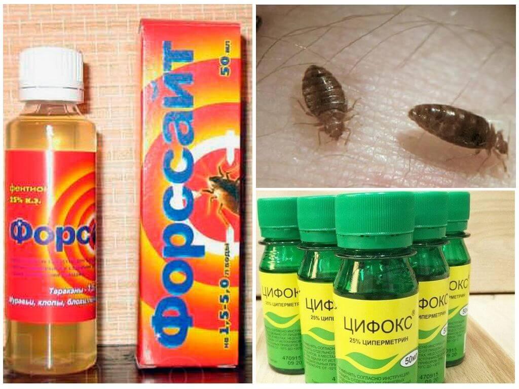 Цифокс и Форссайт от насекомых