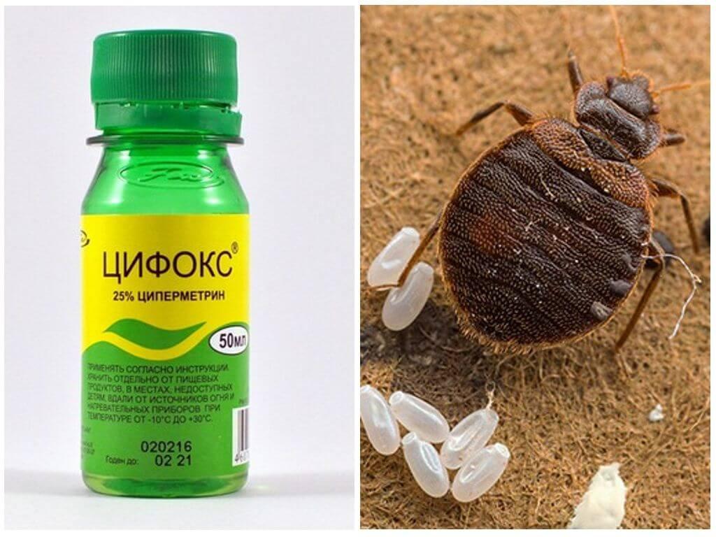 Цифокс для борьбы с насекомыми