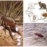 Жизненный цикл насекомого