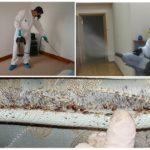 Профессиональные методы уничтожения насекомых