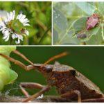 Лесные насекомые