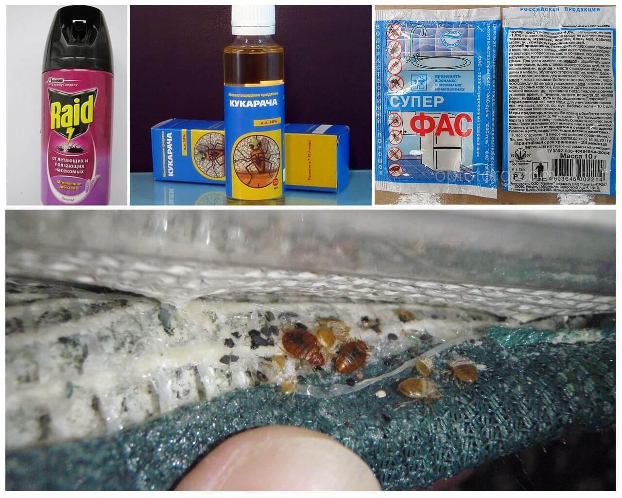 Химические инсектициды от клопов