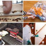 Соблюдение безопасности при дезинфекции помещения