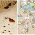 Места обитания клопов в доме