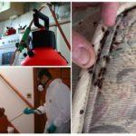 Уничтожение насекомых концентрированными препаратами