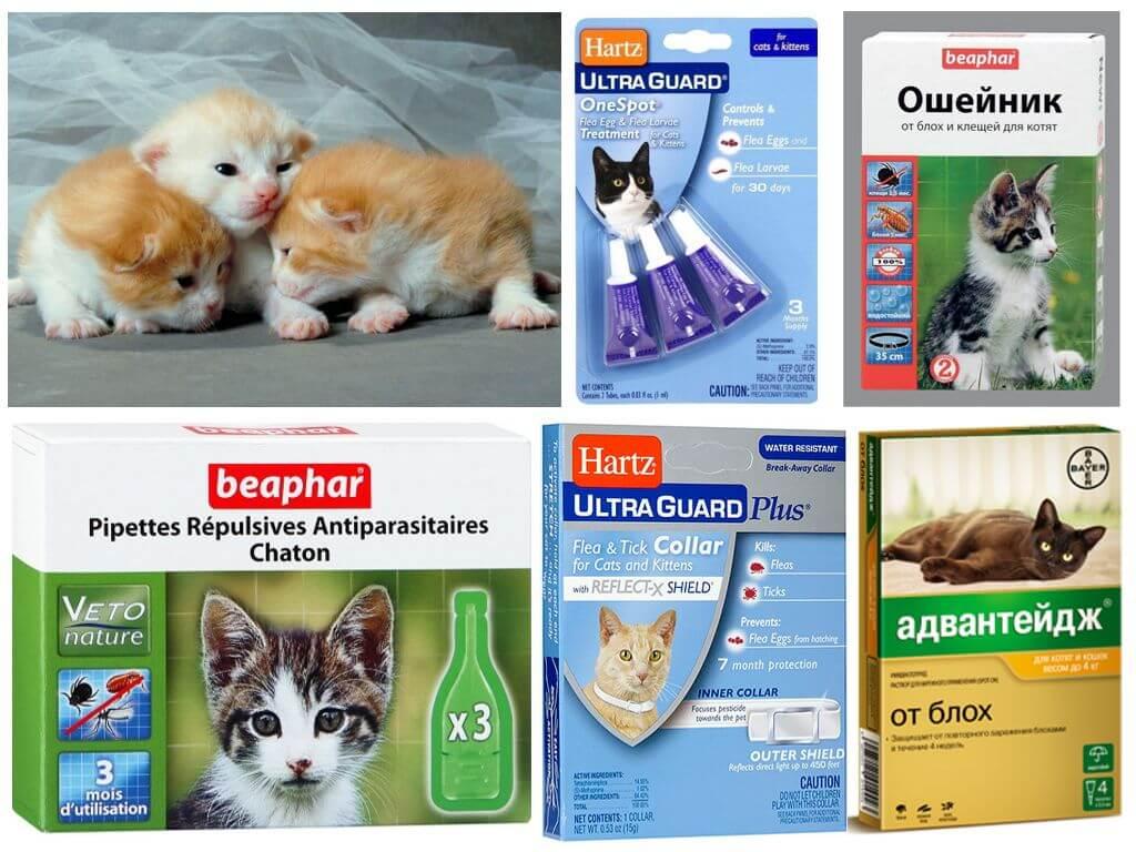 Противопаразитарные препараты для котят