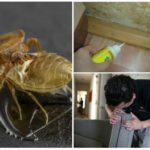 Профилактика возникновения насекомых в доме