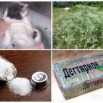 Народные средства от блох у котят