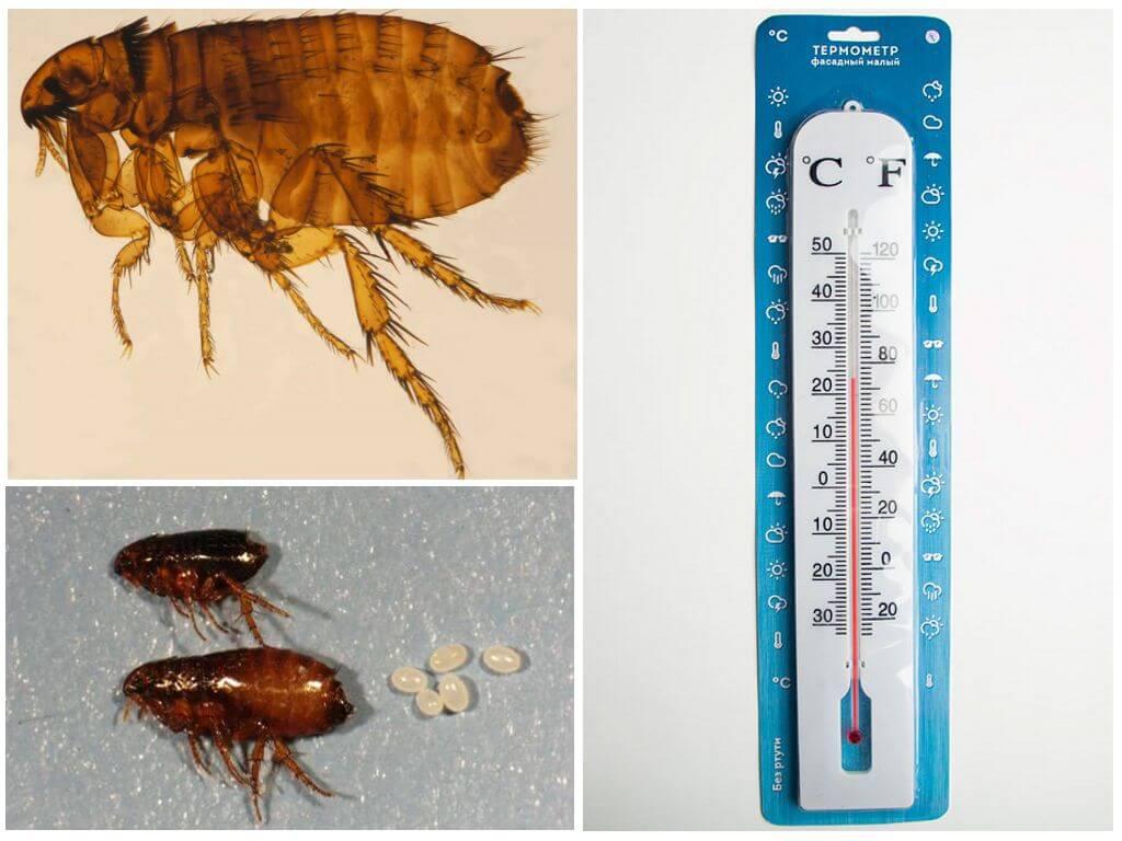 Влияние температуры на жизнь паразитов