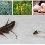 Травы от насекомых