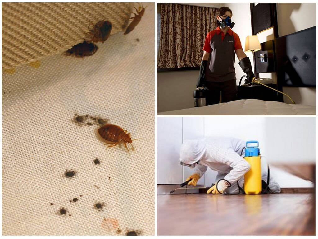 Уничтожение насекомых профессиональными средствами
