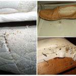 Зараженная клопами обувь и мебель