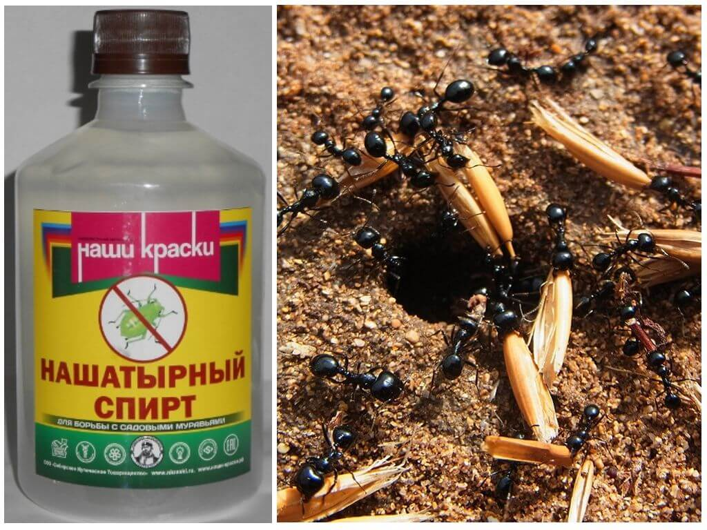 Аммиак от муравьев на огороде