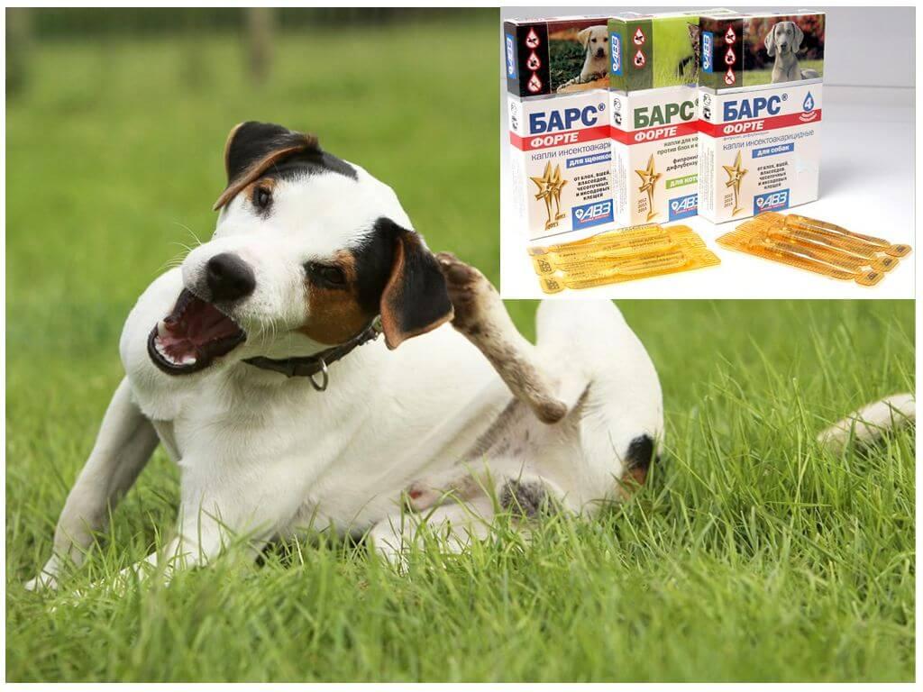 Капли Барс Форте для собак