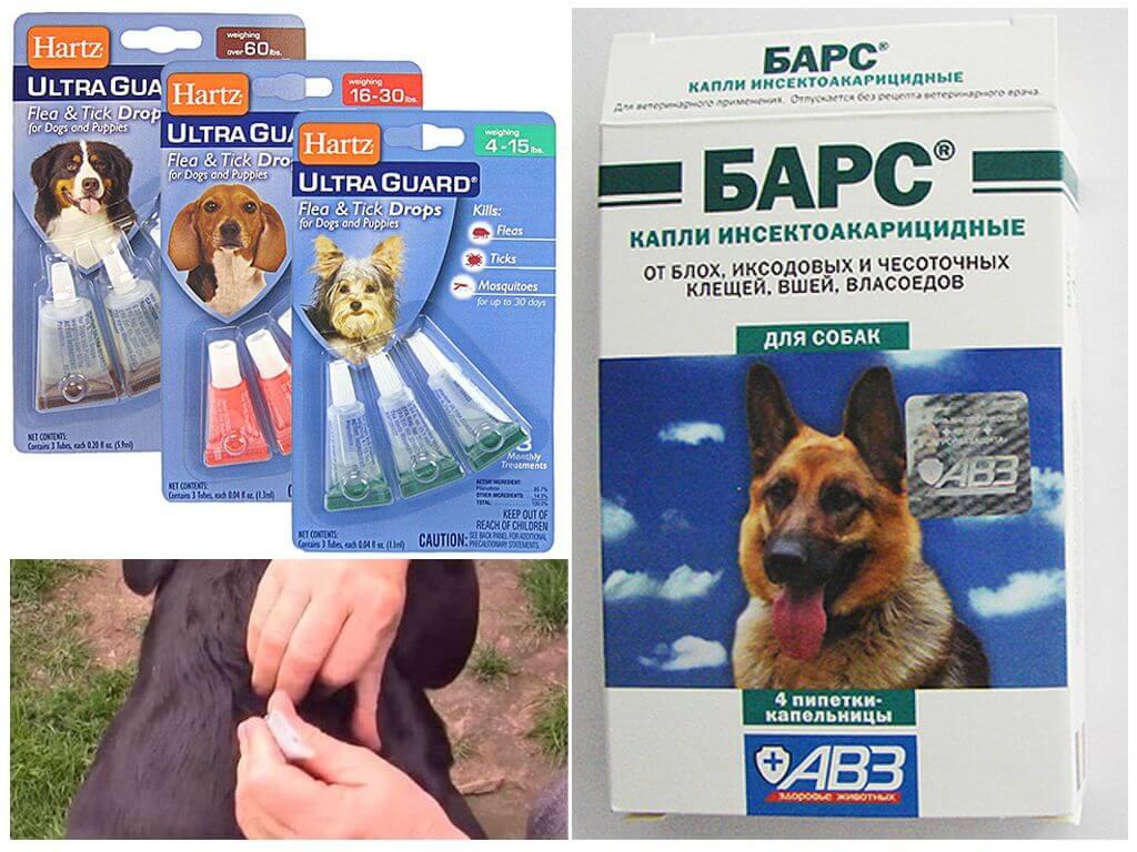 Капли от клещей и блох для собак