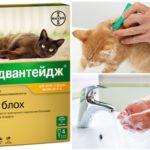 Меры безопасности при обработке животного