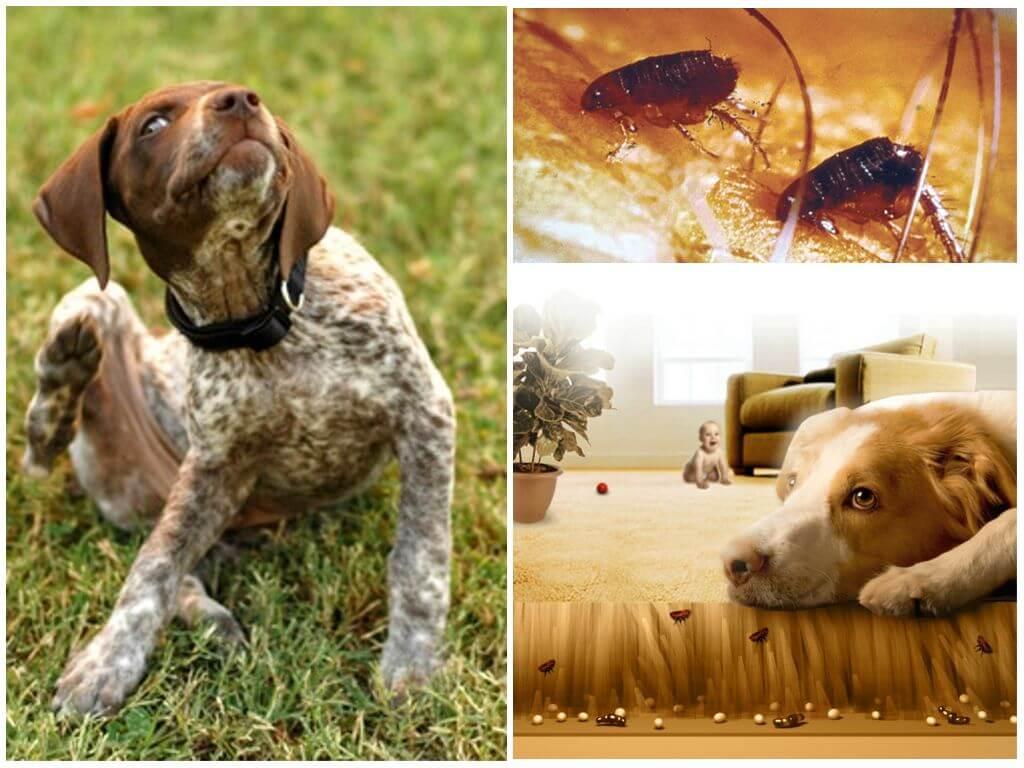 Места обитания насекомых