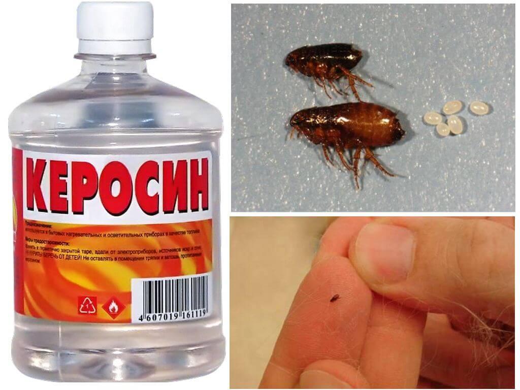 Керосин при борьбе с эктопаразитами