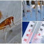 Влияние холода на эктопаразитов