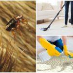 Уничтожение блох в квартире или доме