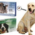 Жевательные таблетки для кошек и собак Capstar