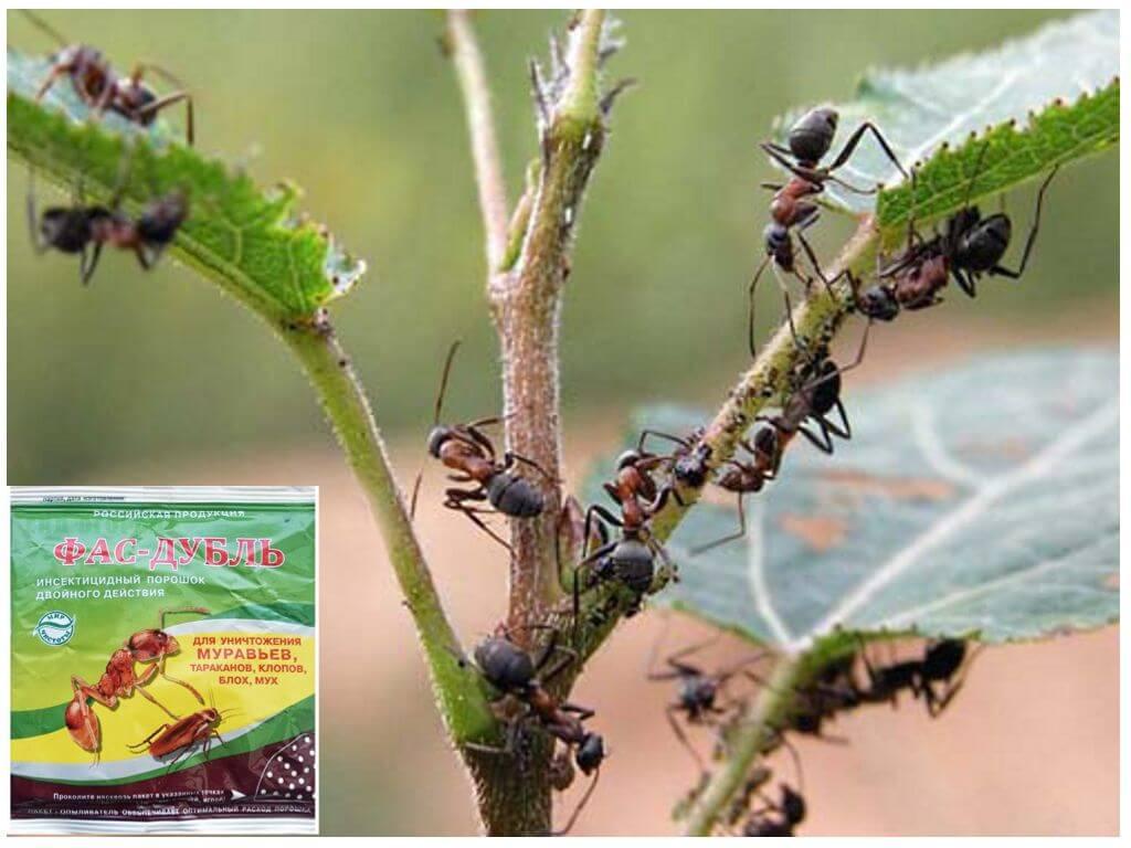Отзывы о средство от тараканов, муравьев, клопов, блох, мух.