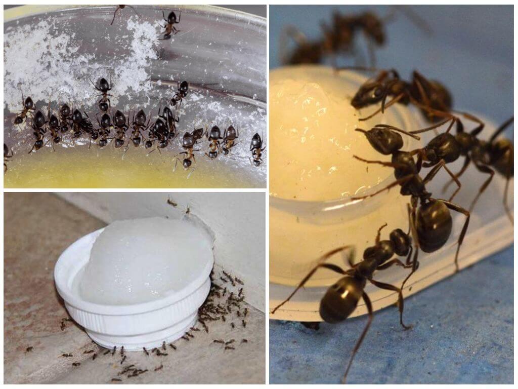 Поэтому при толковании сна к чему снятся муравьи проводится связь с работой, успешностью человека и его финансовым состоянием.