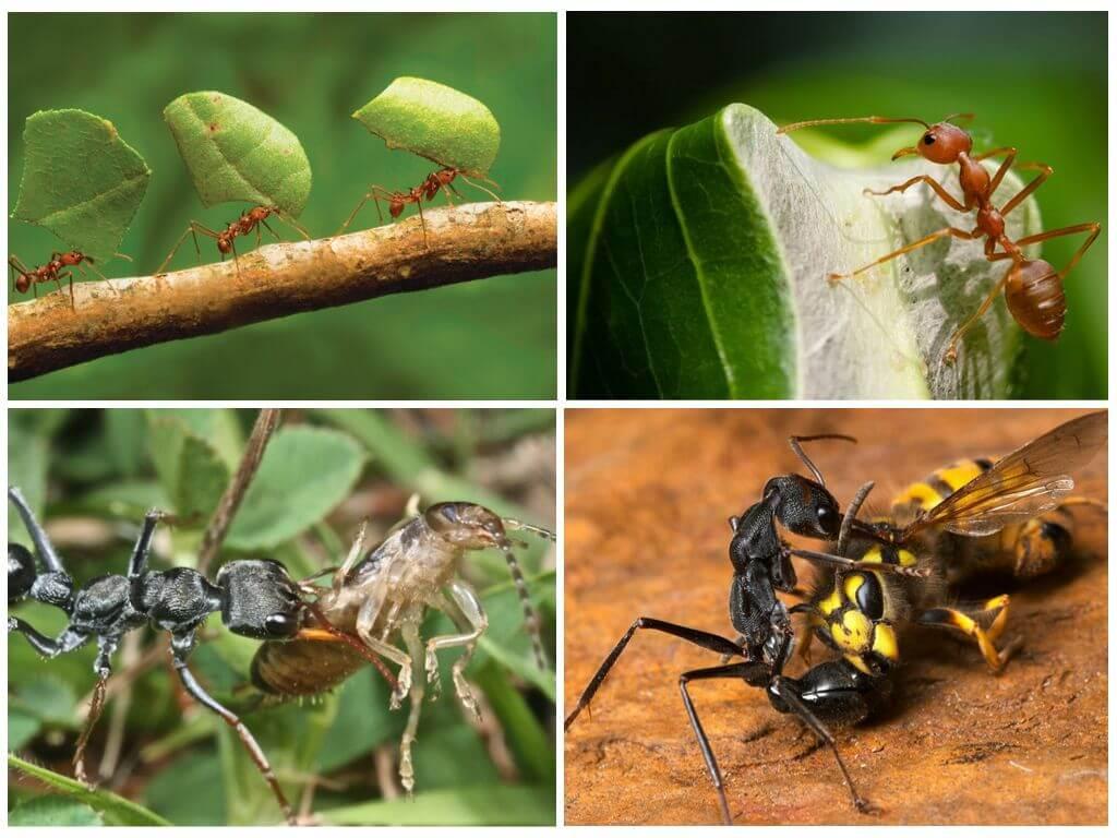 Пища для муравьев