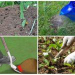 Физические способы борьбы с насекомыми