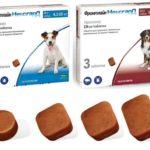 Фронтлайн Нексгард для лечения собак от блох