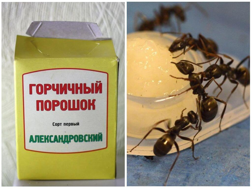 Горчица от муравьев в огороде