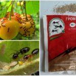 Средство от муравьев Гром 2