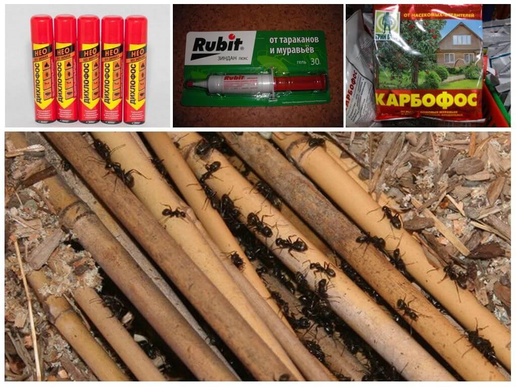 Химические препараты для уничтожения муравьев