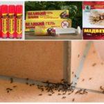 Популярные препараты от садовых муравьев в доме