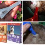 Капли от блох для кошек и собак