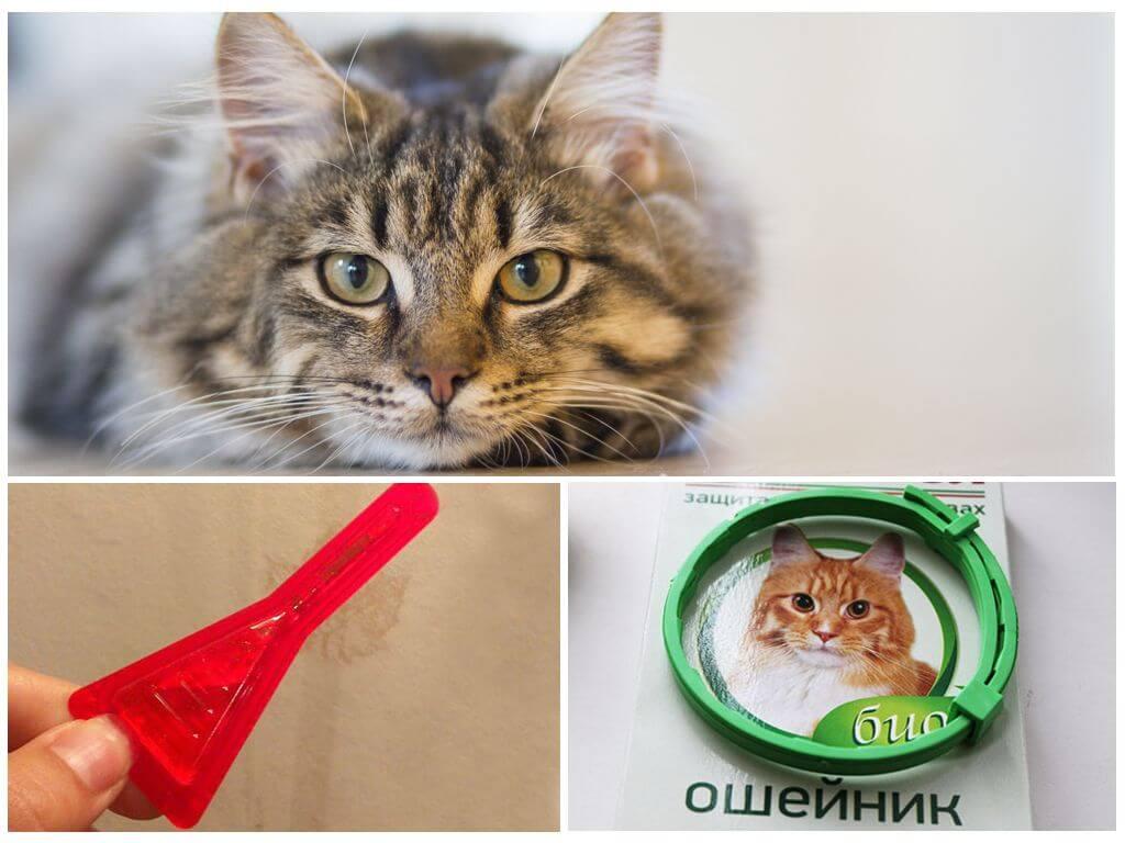 Капли и ошейник для кошек