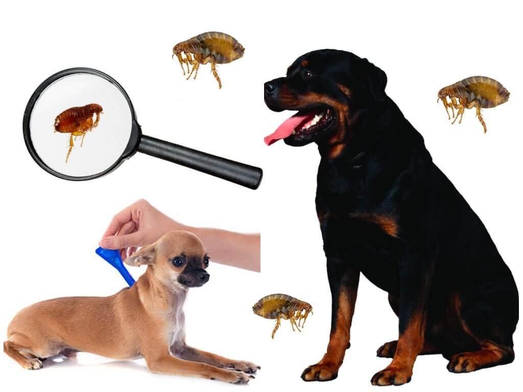 Капли для защиты животного от паразитов