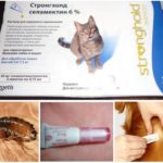 Инсектицид Stronghold для домашних питомцев