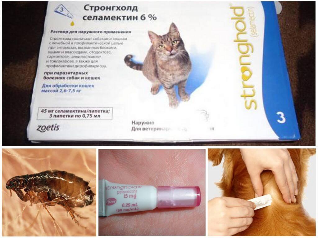 стронгхолд для котят от чего