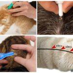 Применение капель для кошек
