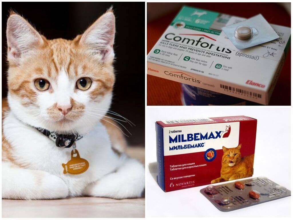 Таблетки для кошек для борьбы с эктопаразитами