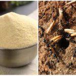 Манка от муравьев