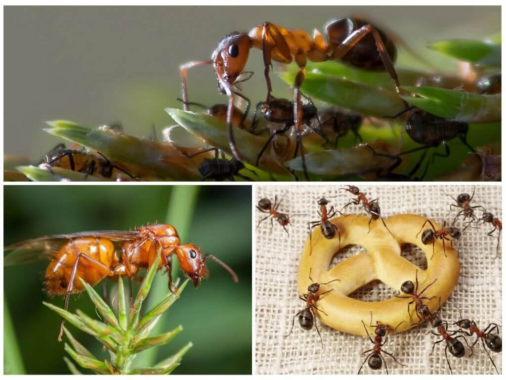 Еда для муравья