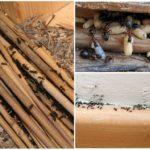 Муравьи в деревянном доме