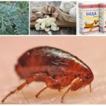 Народные методы борьбы с паразитами