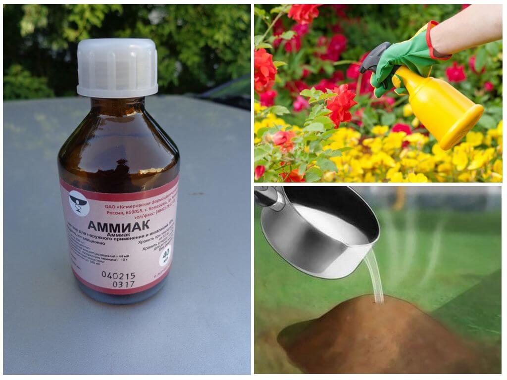 Использование нашатырного спирта против муравьев
