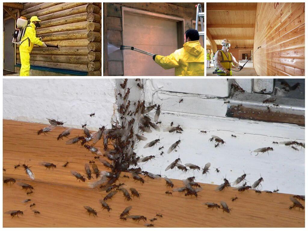 Обработка дома от муравьев